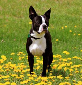 בנפט כלבים קטנים - חנות עולם של כלבים DogsWorld QG-57