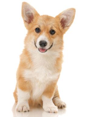 להפליא כלבים קטנים - חנות עולם של כלבים DogsWorld HJ-06