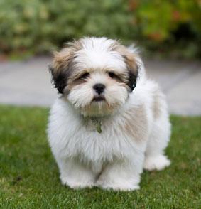 ניס כלבים קטנים - חנות עולם של כלבים DogsWorld KQ-06
