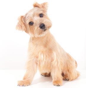 הוראות חדשות כלבים קטנים - חנות עולם של כלבים DogsWorld EX-82