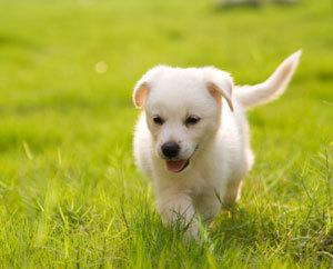 תוצאת תמונה עבור כלבי
