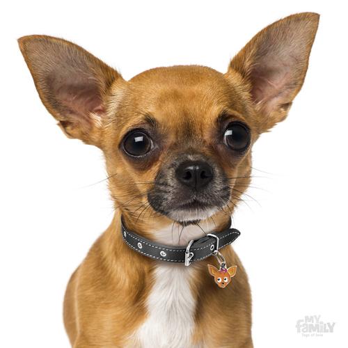 מצטיין תג שם כלב צ'יוואווה חום CHIHUAHUA BROWN My family - My family - תגי שם EY-66