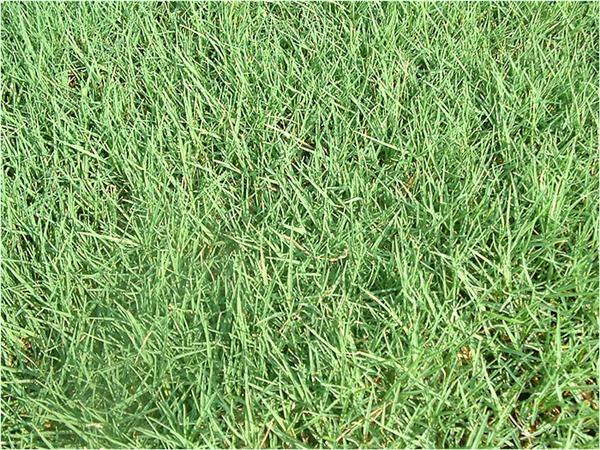 ברצינות דשא טבעי - קטלוג סוגי דשא מוכן למכירה - מחיר מבצע - MyGan WA-91
