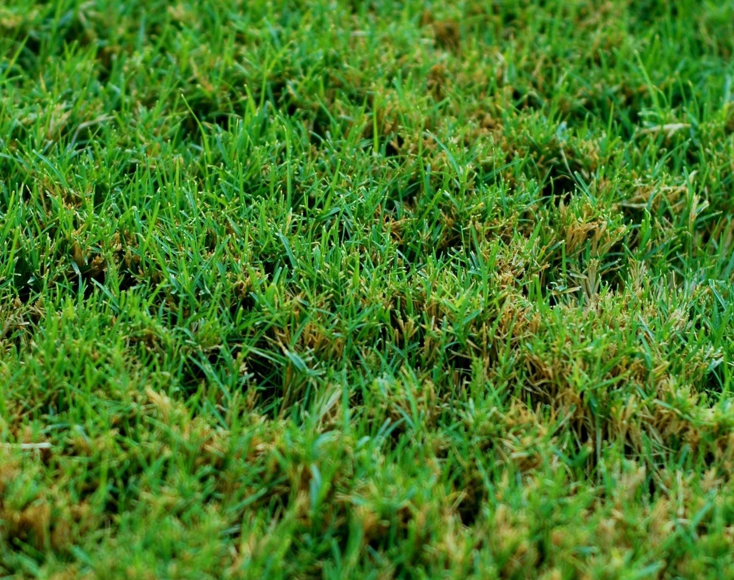 מודרני דשא טבעי - קטלוג סוגי דשא מוכן למכירה - מחיר מבצע - MyGan HK-45
